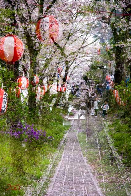 20160410苗ヶ島町桜まつり16