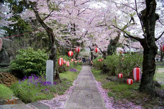20160410苗ヶ島町桜まつり14