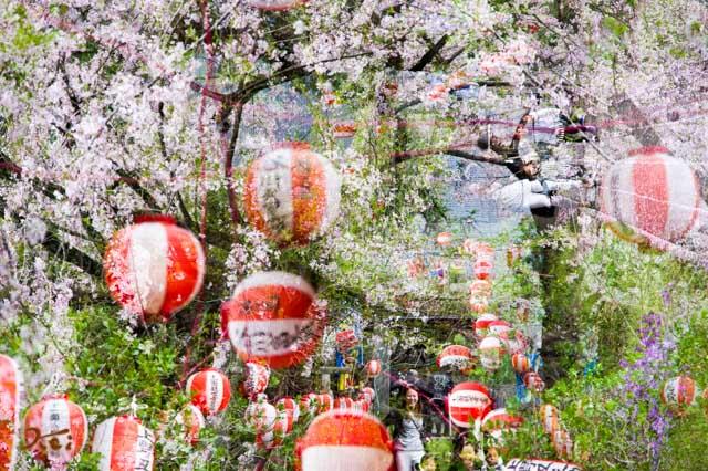20160410苗ヶ島町桜まつり15