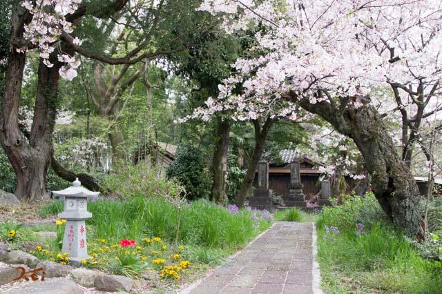 20160410苗ヶ島町桜まつり07
