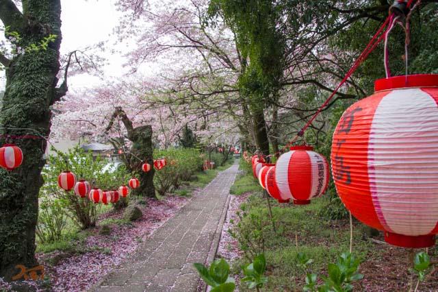 20160410苗ヶ島町桜まつり10