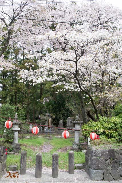 20160410苗ヶ島町桜まつり05