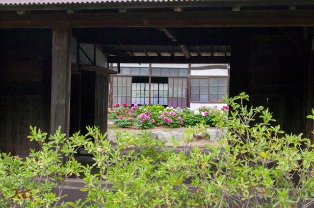 20162064ひな牡丹園09