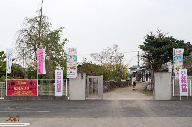 20162064ひな牡丹園02