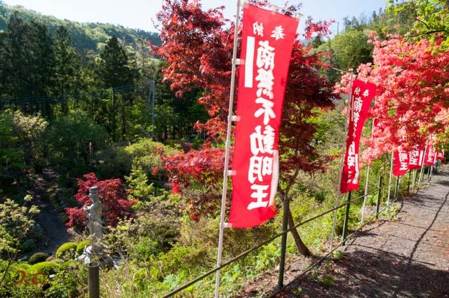 20160504龍願寺ぼたん祭り前半13