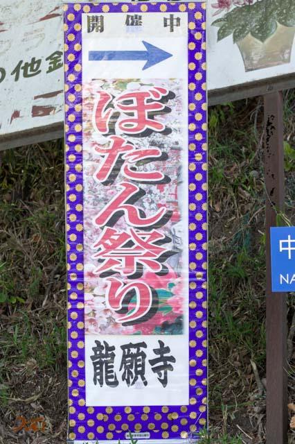 20160504龍願寺ぼたん祭り前半01