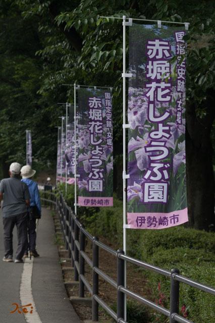 20160612花菖蒲_赤堀02