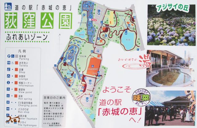 20160612アジサイ_荻窪公園16