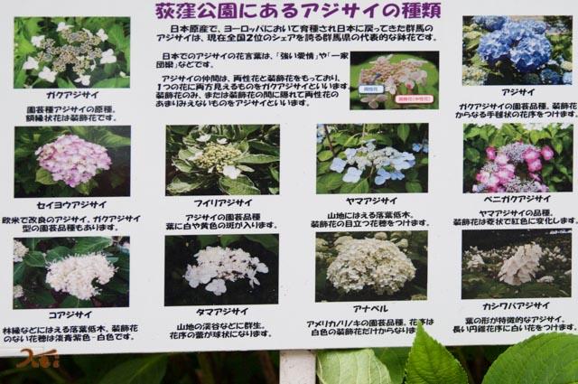 20160612アジサイ_荻窪公園17