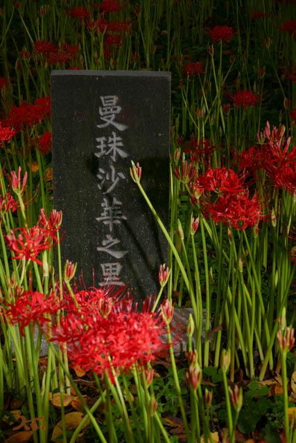 20160924彼岸花_恩林寺114