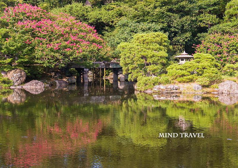 京都御所 池と百日紅