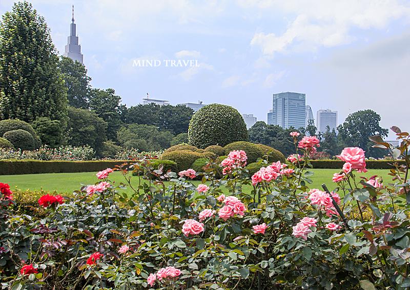新宿御苑 薔薇