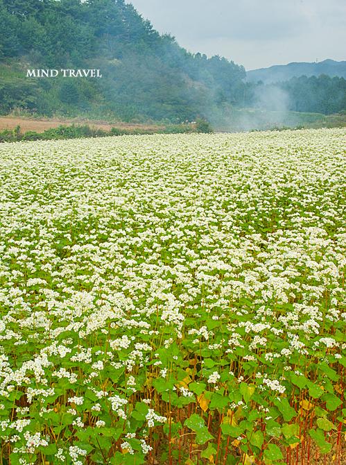 笠 蕎麦畑