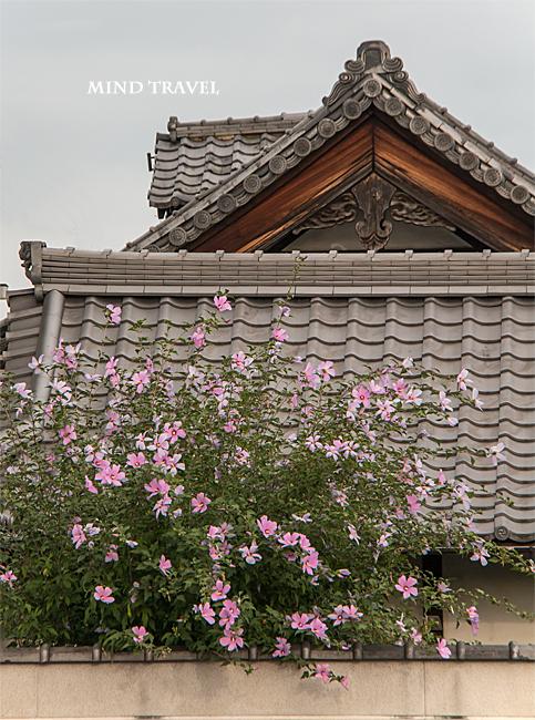 常林寺 木槿