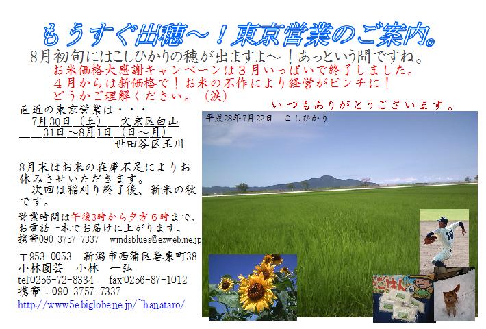 2016072501営業案内7~8月