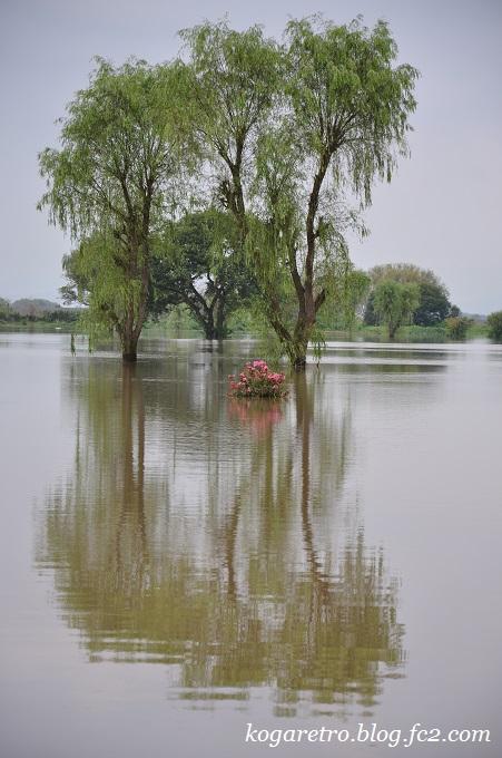 古河ゴルフリンクス水没5