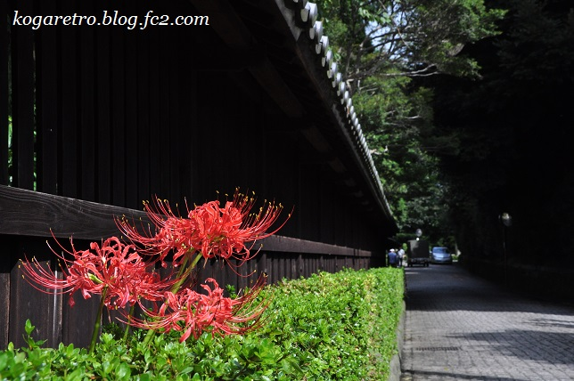 2016鷹見泉石記念館の彼岸花5