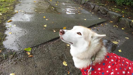 160827 雨01
