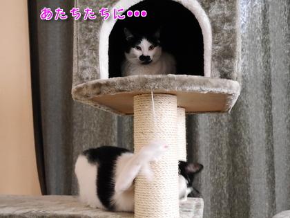 2016.9 にゃんこタワーでちゅよ~♪ 5