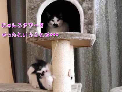 2016.9 にゃんこタワーでちゅよ~♪ 6