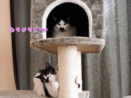 2016.9 にゃんこタワーでちゅよ~♪ 7