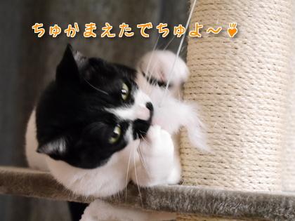 2016.9 にゃんこタワーでちゅよ~♪ 10