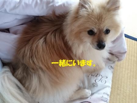 20160918a_1.jpg