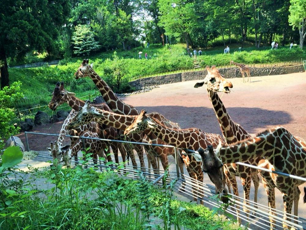 多摩動物園2016