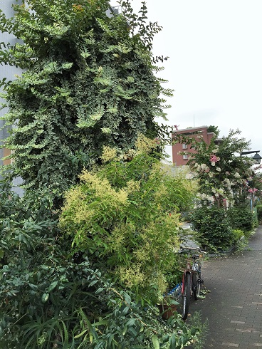 高円寺の街路樹2016_07#2