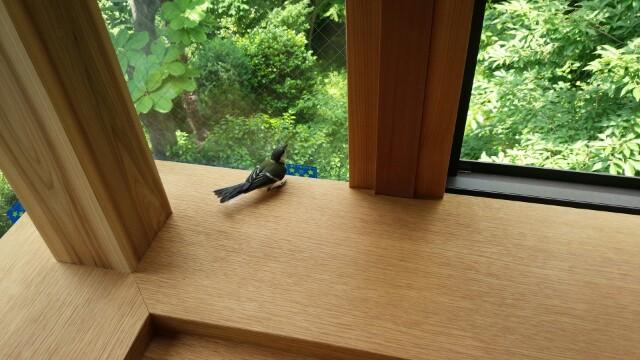 家に鳥が来る