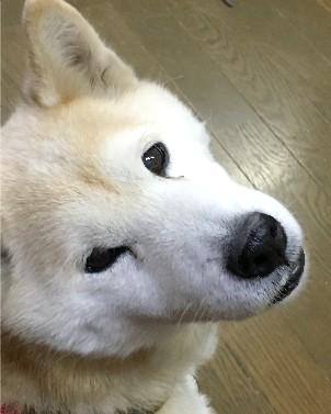 小梅ちゃん1