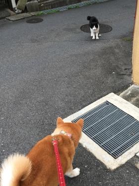猫さん_Fotor