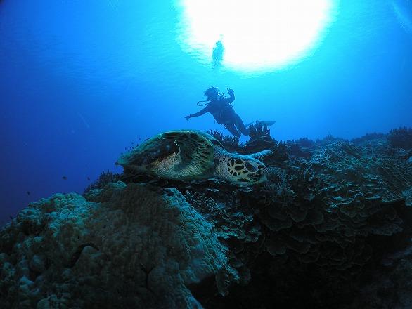 慶良間ダイビングカメ 5