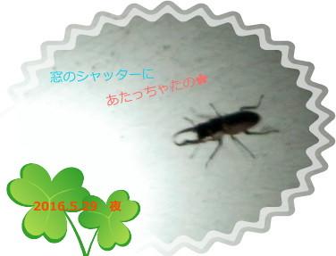 花ブ20160603-2