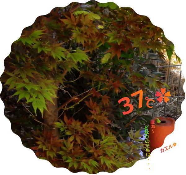 花ブ20160817-1