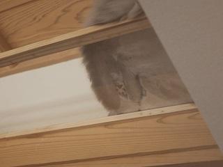猫カフェ 肉球1