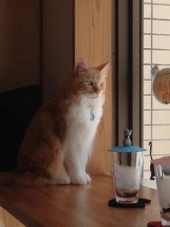 猫カフェ5
