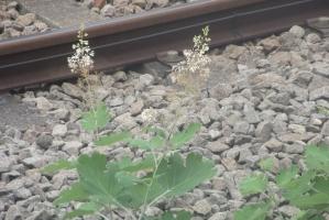 線路の草花