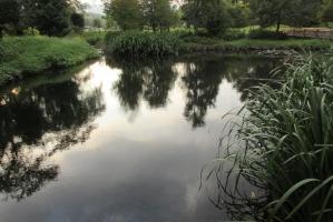 広町公園の池