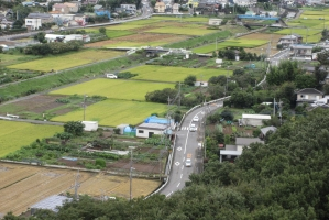 温水の田んぼと道