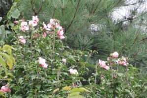 ネポンの花木