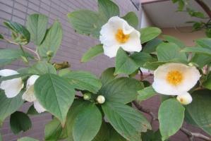 エステ前の白花