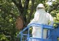 蜂の巣除去-6
