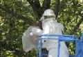 蜂の巣除去-7
