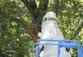 蜂の巣除去-8