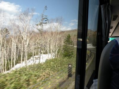 春の名木ツアー