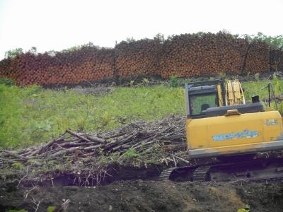 木材ブーム