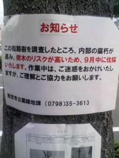 街路樹伐採予告 160924_1525~001