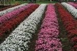 花の都公園7