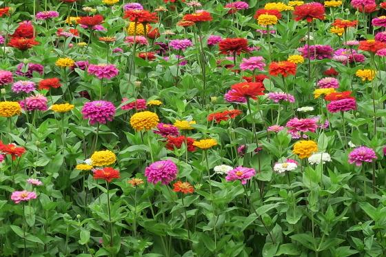 花の都公園6
